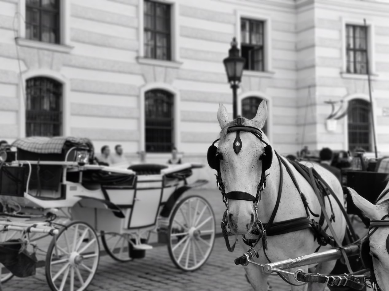 Black and white photograph of a horse drawn carriage