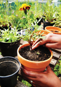 Image showing a person potting plants